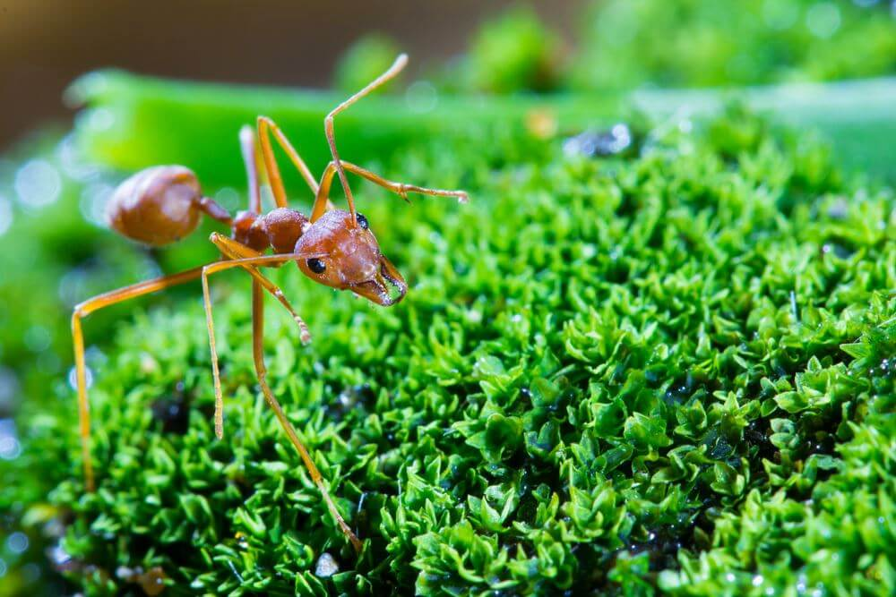Ants Pest Control Services Company