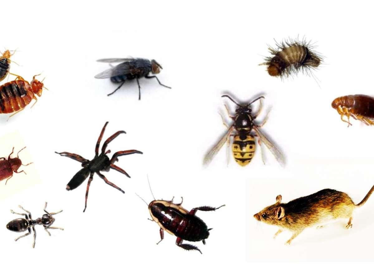 Digital Pest Control Services